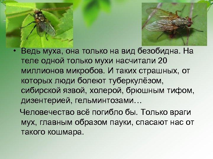 • Ведь муха, она только на вид безобидна. На теле одной только мухи