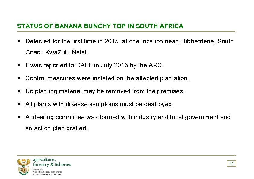 STATUS OF BANANA BUNCHY TOP IN SOUTH AFRICA § Detected for the first