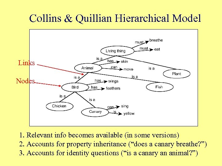 Collins & Quillian Hierarchical Model Links Nodes 1. Relevant info becomes available (in some