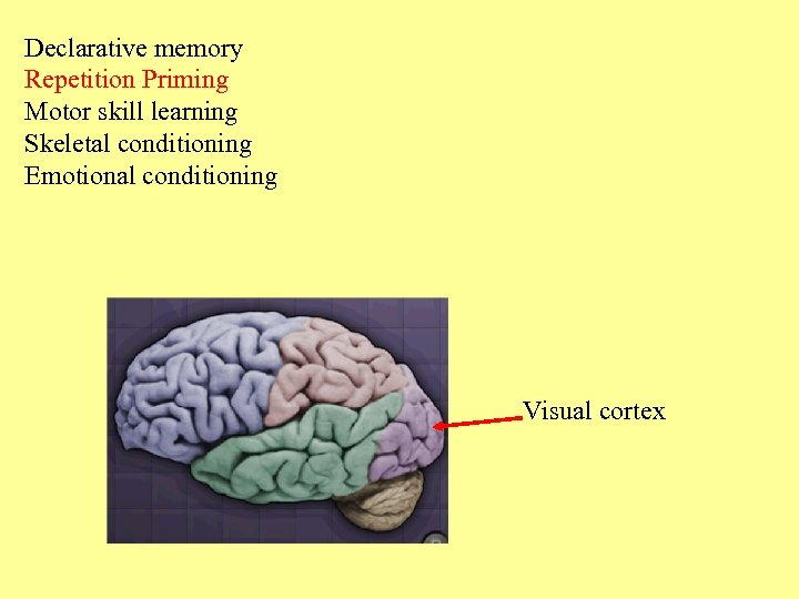 Declarative memory Repetition Priming Motor skill learning Skeletal conditioning Emotional conditioning Visual cortex