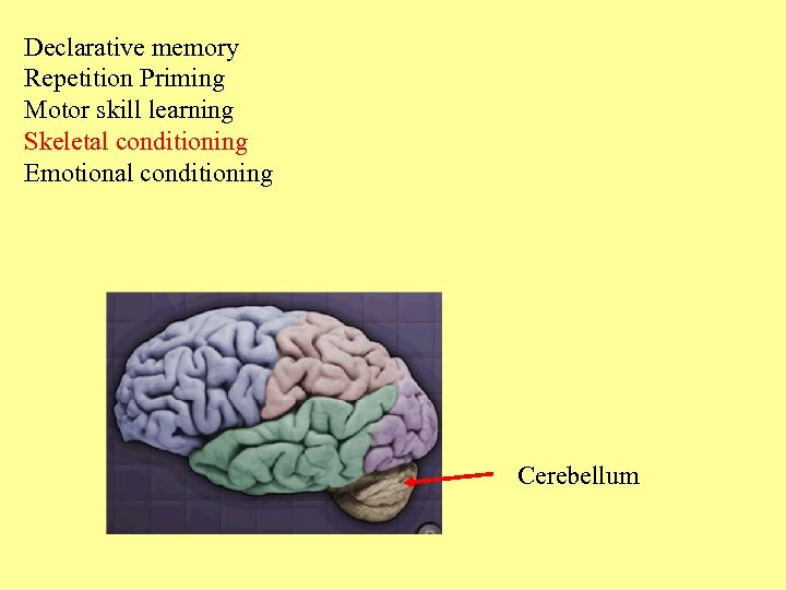 Declarative memory Repetition Priming Motor skill learning Skeletal conditioning Emotional conditioning Cerebellum