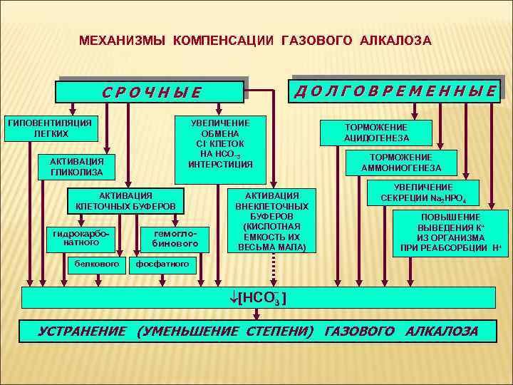 МЕХАНИЗМЫ КОМПЕНСАЦИИ ГАЗОВОГО АЛКАЛОЗА ДОЛГОВРЕМЕННЫЕ СРОЧНЫЕ УВЕЛИЧЕНИЕ ОБМЕНА Cl- КЛЕТОК НА НСО_3 ИНТЕРСТИЦИЯ ГИПОВЕНТИЛЯЦИЯ