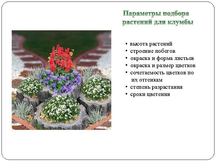 • высота растений • строение побегов • окраска и форма листьев • окраска