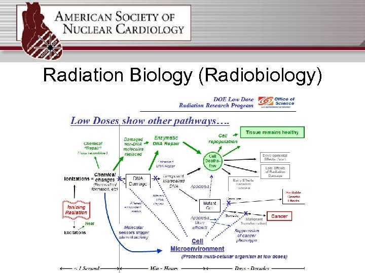 Radiation Biology (Radiobiology)