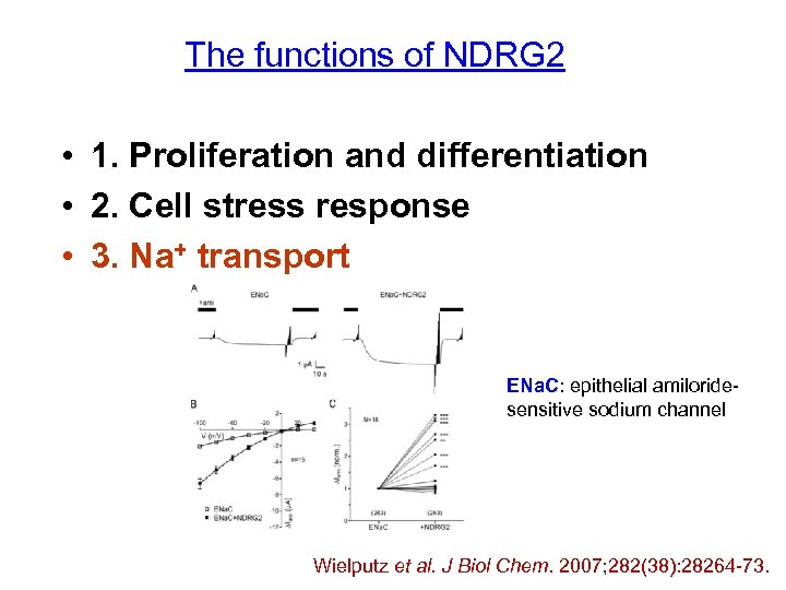 The functions of NDRG 2 • 1. Proliferation and differentiation • 2. Cell stress