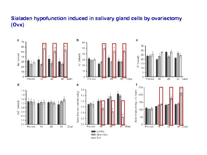 Sialaden hypofunction induced in salivary gland cells by ovariectomy (Ovx)