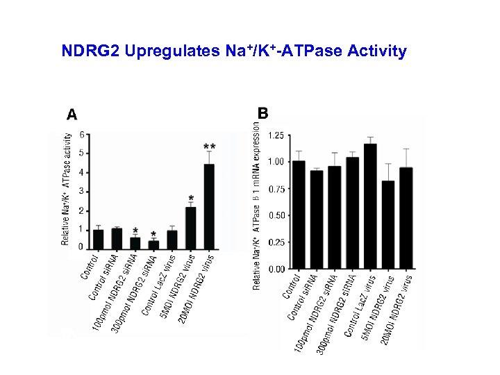 NDRG 2 Upregulates Na+/K+-ATPase Activity