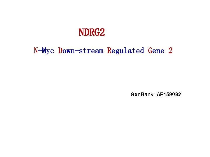 NDRG 2 N-Myc Down-stream Regulated Gene 2 Gen. Bank: AF 159092