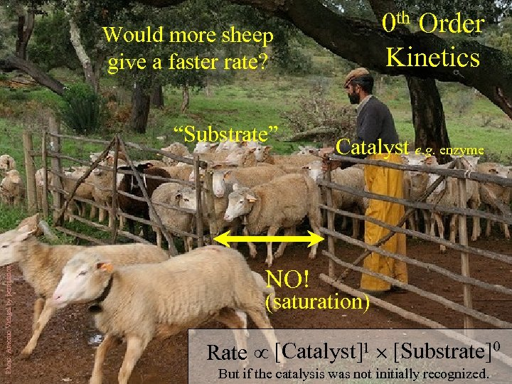 0 th Order Kinetics Would more sheep give a faster rate? Photo: Antonio Vidigal