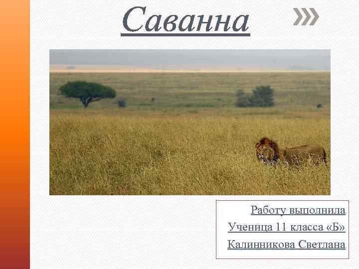 Саванна Работу выполнила Ученица 11 класса «Б» Калинникова Светлана