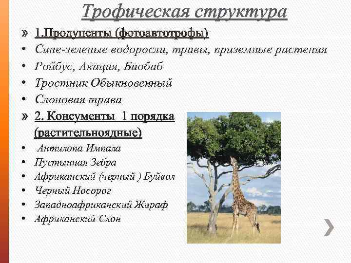 Трофическая структура » • • » 1. Продуценты (фотоавтотрофы) Сине-зеленые водоросли, травы, приземные растения