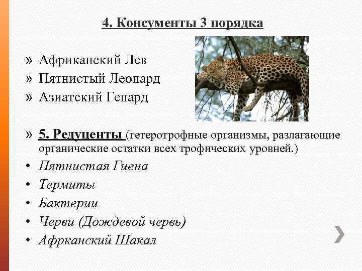 4. Консументы 3 порядка » Африканский Лев » Пятнистый Леопард » Азиатский Гепард »