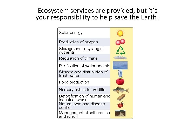 Ecosystem services are provided, but it's your responsibility to help save the Earth! Section
