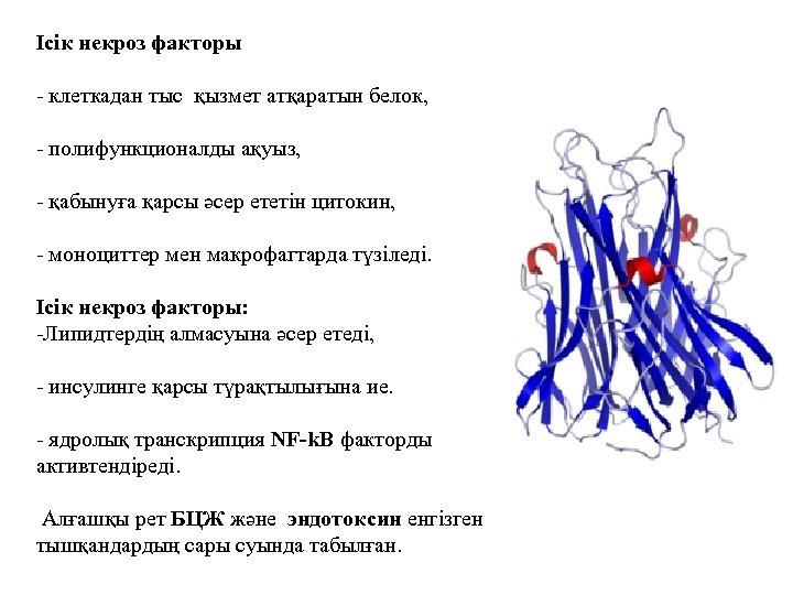 Ісік некроз факторы - клеткадан тыс қызмет атқаратын белок, - полифункционалды ақуыз, - қабынуға