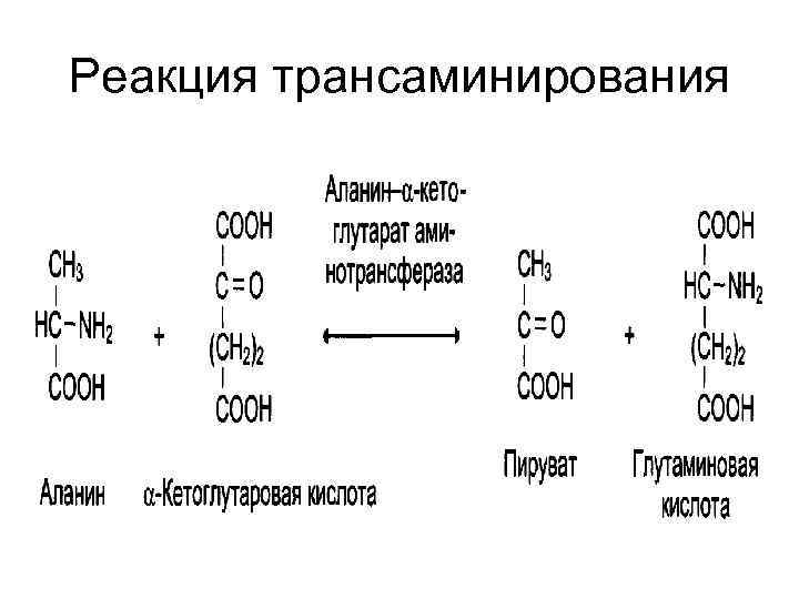 Реакция трансаминирования
