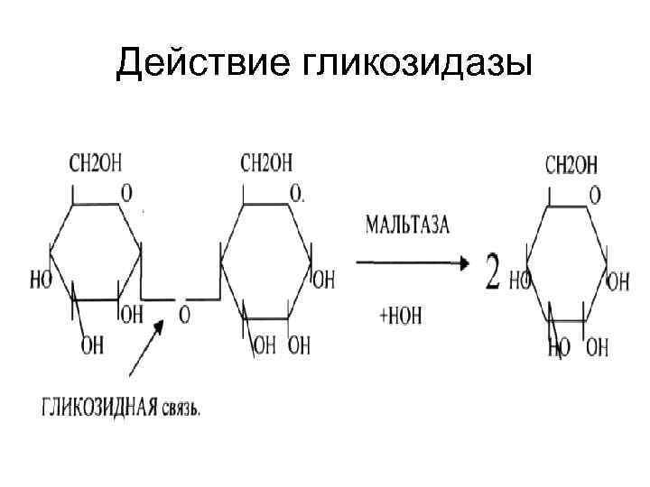 Действие гликозидазы