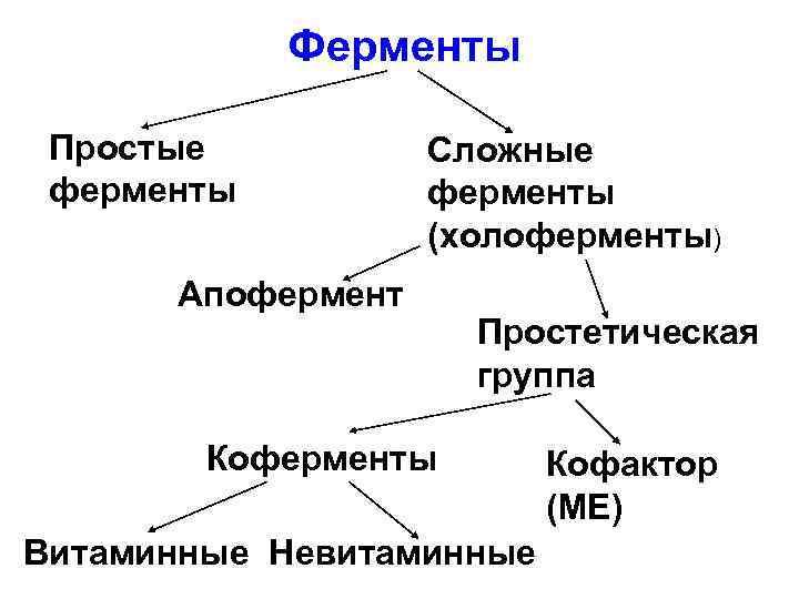 Ферменты Простые ферменты Сложные ферменты (холоферменты) Апофермент Простетическая группа Коферменты Витаминные Невитаминные Кофактор (МЕ)
