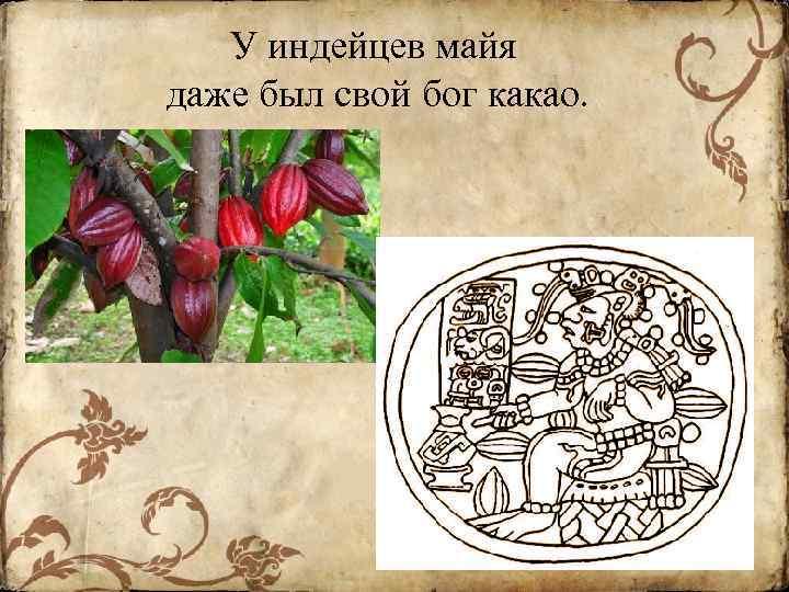 У индейцев майя даже был свой бог какао.