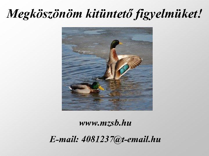 Megköszönöm kitüntető figyelmüket! www. mzsb. hu E-mail: 4081237@t-email. hu