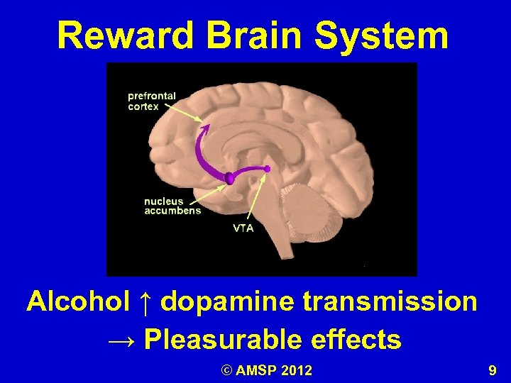 Reward Brain System Alcohol ↑ dopamine transmission → Pleasurable effects © AMSP 2012 9
