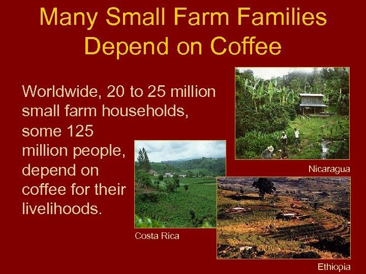 Many Small Farm Families Depend on Coffee Worldwide, 20 to 25 million small farm