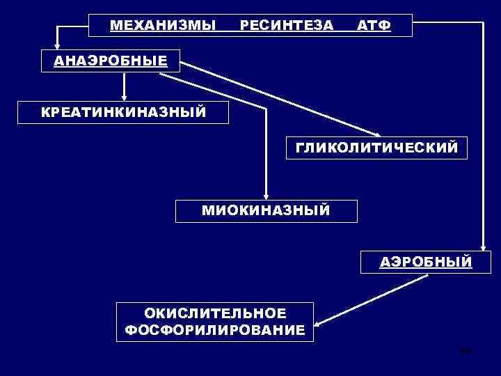 МЕХАНИЗМЫ РЕСИНТЕЗА АТФ АНАЭРОБНЫЕ КРЕАТИНКИНАЗНЫЙ ГЛИКОЛИТИЧЕСКИЙ МИОКИНАЗНЫЙ АЭРОБНЫЙ ОКИСЛИТЕЛЬНОЕ ФОСФОРИЛИРОВАНИЕ 24