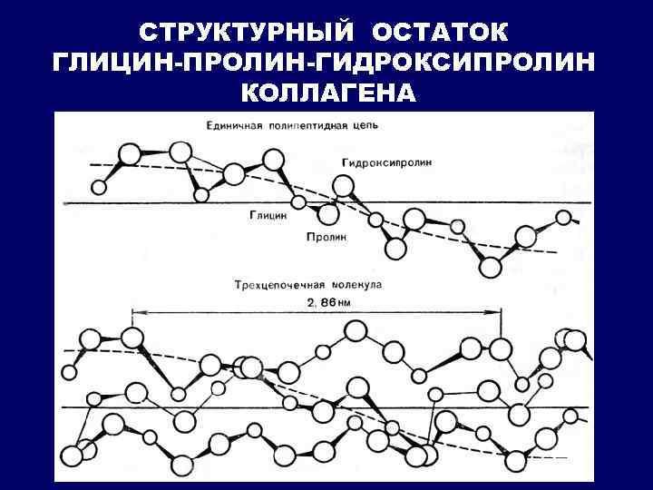 СТРУКТУРНЫЙ ОСТАТОК ГЛИЦИН-ПРОЛИН-ГИДРОКСИПРОЛИН КОЛЛАГЕНА