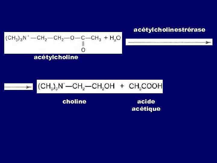 acétylcholinestrérase acétylcholine acide acétique