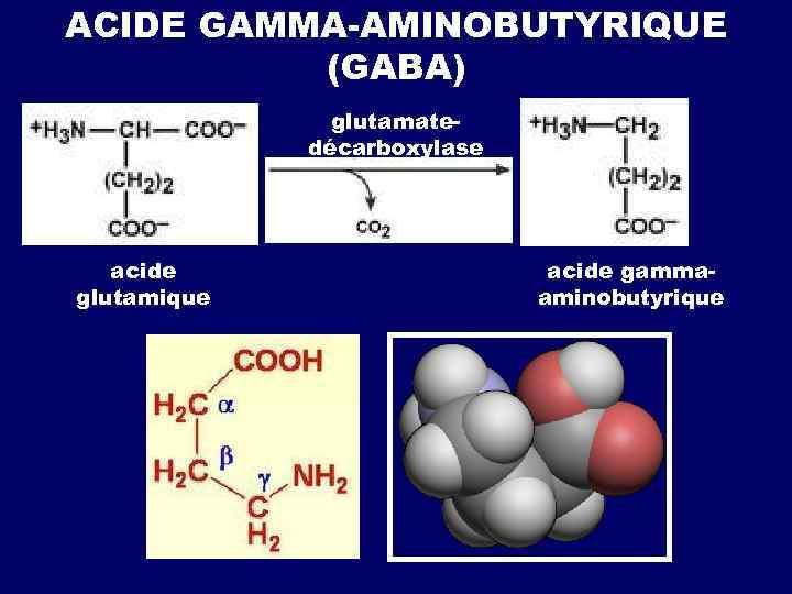 ACIDE GAMMA-AMINOBUTYRIQUE (GABA) glutamatedécarboxylase acide glutamique acide gammaaminobutyrique