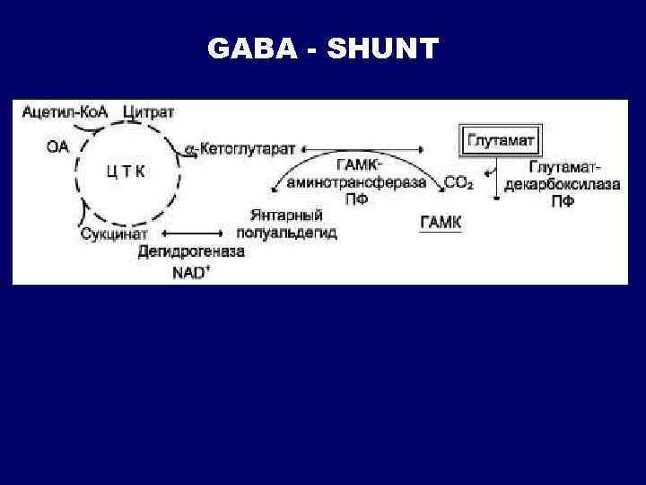 GABA - SHUNT