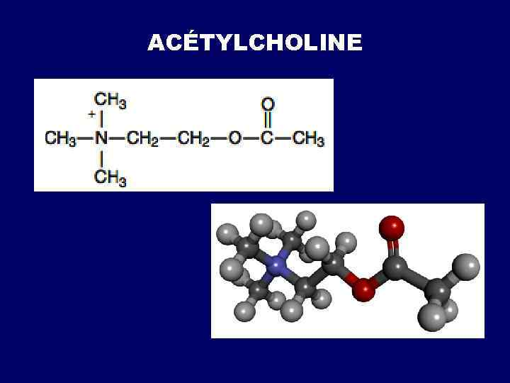 ACÉTYLCHOLINE