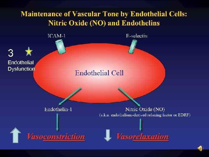 3 Endothelial Dysfunction