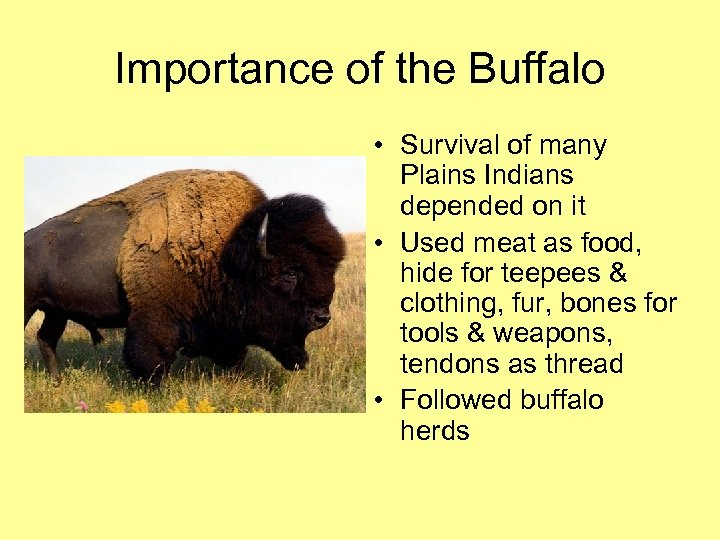 Importance of the Buffalo • Survival of many Plains Indians depended on it •