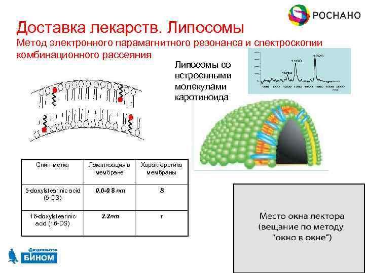 Доставка лекарств. Липосомы Метод электронного парамагнитного резонанса и спектроскопии комбинационного рассеяния Липосомы со встроенными