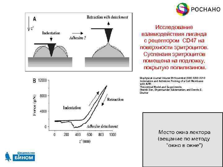 Исследование взаимодействия лиганда с рецептором CD 47 на поверхности эритроцитов. Суспензия эритроцитов помещена на