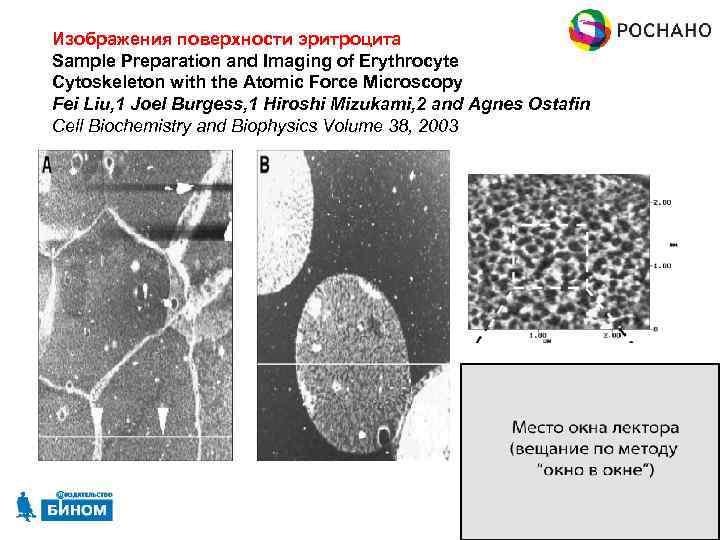 Изображения поверхности эритроцита Sample Preparation and Imaging of Erythrocyte Cytoskeleton with the Atomic Force