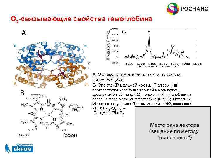 О 2 -связывающие свойства гемоглобина А А: Молекула гемоглобина в окси-и дезоксиконформациях Б: