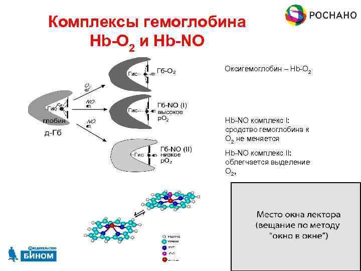 Комплексы гемоглобина Hb-O 2 и Hb-NO Оксигемоглобин – Hb-O 2 Hb-NO комплекс I: сродство