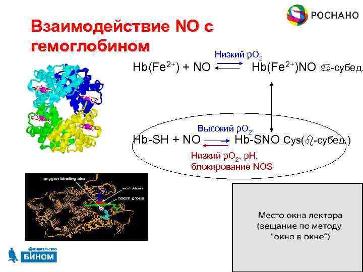 Взаимодействие NO с гемоглобином Низкий p. O 2 Hb(Fe 2+) + NO Hb(Fe 2+)NO