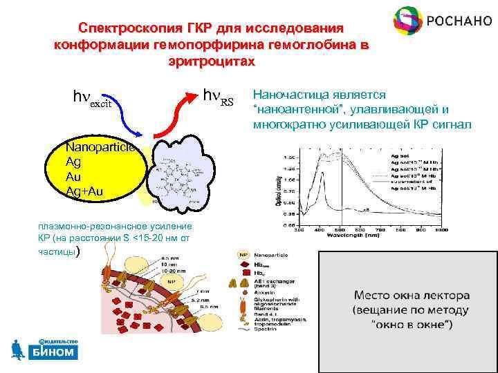 Спектроскопия ГКР для исследования конформации гемопорфирина гемоглобина в эритроцитах hnexcit hn. RS Наночастица является