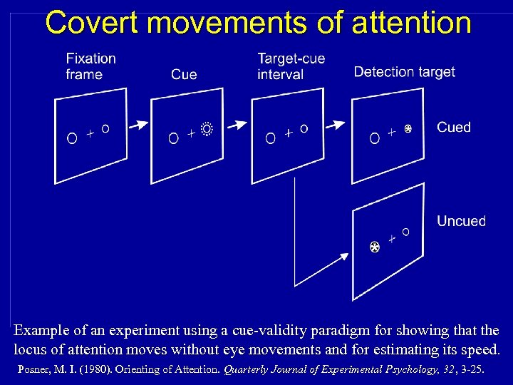 Covert movements of attention Example of an experiment using a cue-validity paradigm for showing