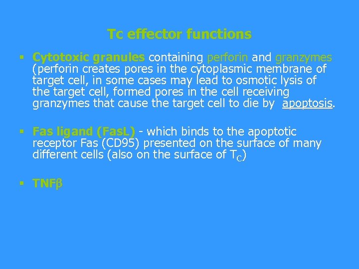 Tc effector functions § Cytotoxic granules containing perforin and granzymes (perforin creates pores in