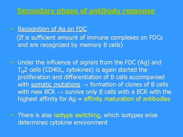 Secondary phase of antibody response § Recognition of Ag on FDC (If is sufficient