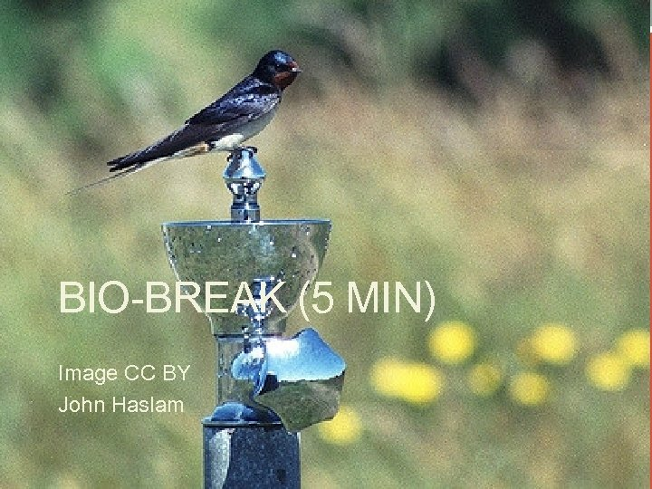 BIO-BREAK (5 MIN) Image CC BY John Haslam