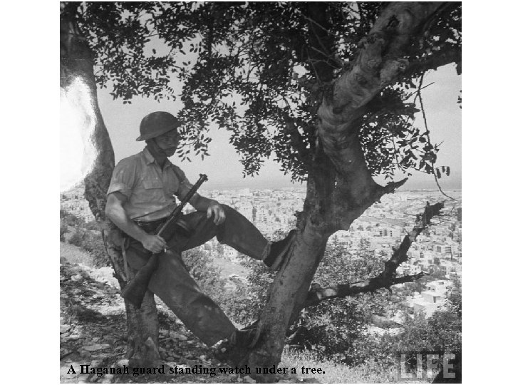 A Haganah guard standing watch under a tree.