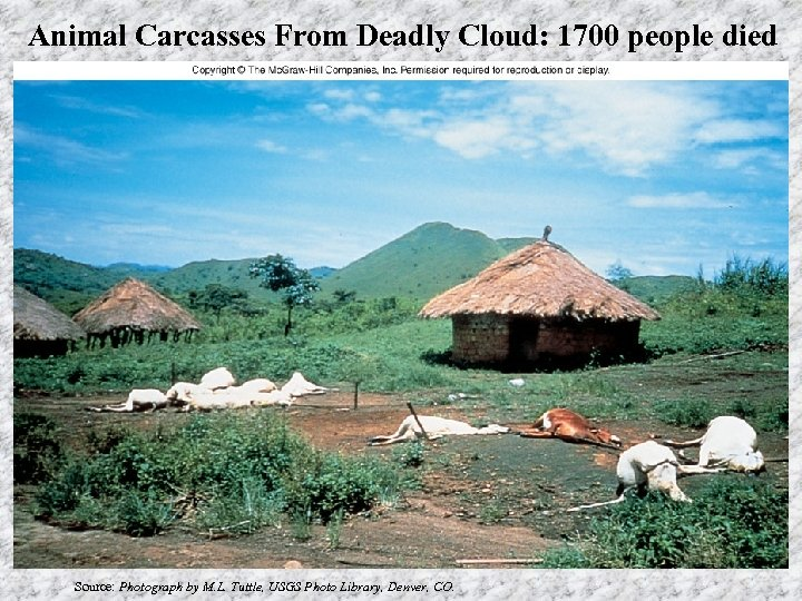Animal Carcasses From Deadly Cloud: 1700 people died Source: Photograph by M. L. Tuttle,
