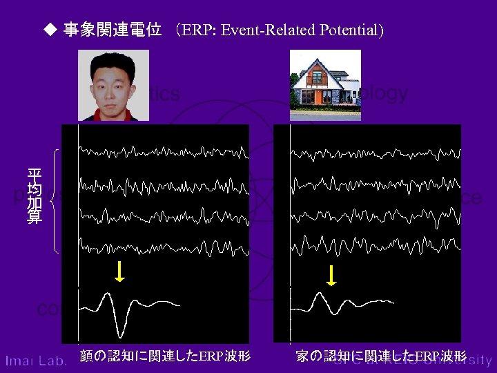 ◆ 事象関連電位 (ERP: Event-Related Potential) 平 均 加 算 顔の認知に関連したERP波形 家の認知に関連したERP波形