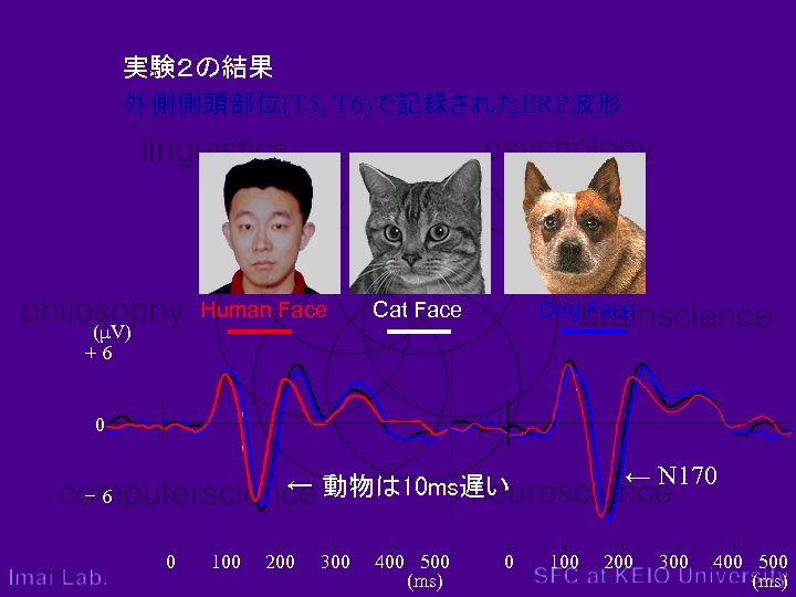 実験2の結果 外側側頭部位(T 5, T 6)で記録されたERP波形 Human Face (μV) +6 Cat Face Dog Face 0