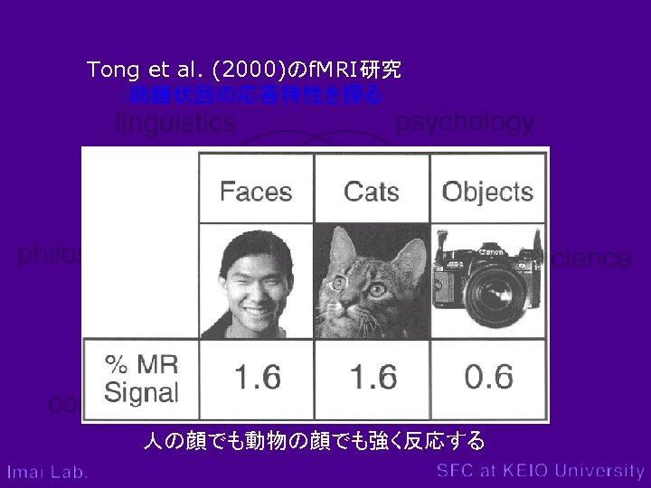 Tong et al. (2000)のf. MRI研究 :紡錘状回の応答特性を探る 人の顔でも動物の顔でも強く反応する