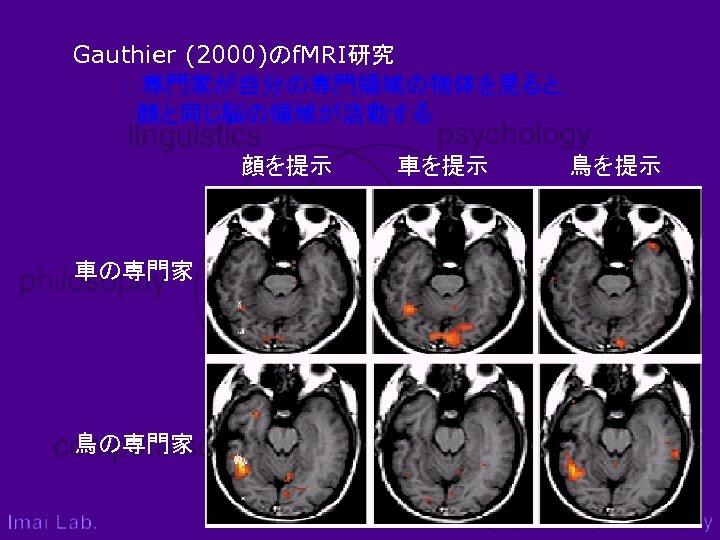Gauthier (2000)のf. MRI研究    : 専門家が自分の専門領域の物体を見ると,     顔と同じ脳の領域が活動する 顔を提示    車を提示     鳥を提示 車の専門家 鳥の専門家